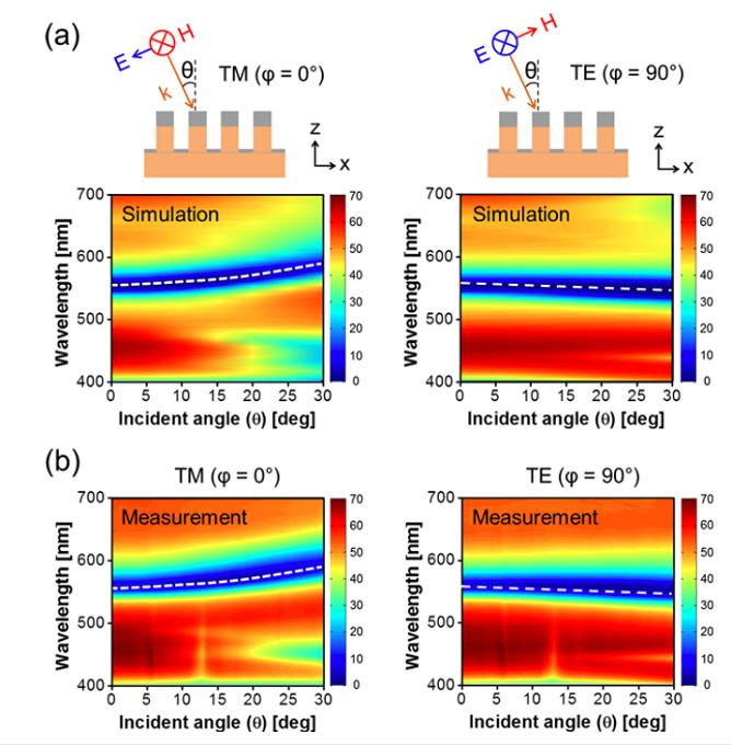 对滤光片偏振态下的角分辨反射光谱进行理论计算与测量