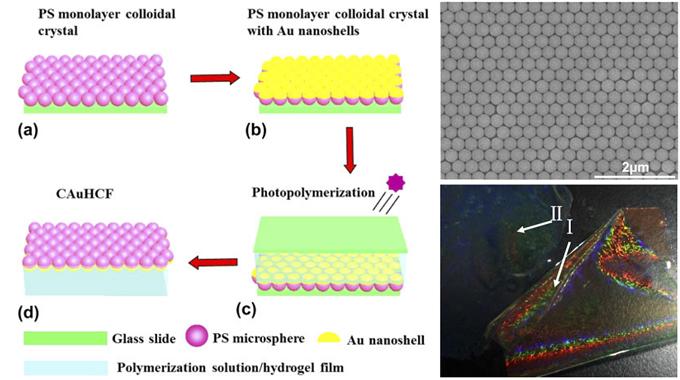 光子晶体-金属-凝胶复合膜 (CAuHCF) 的合成过程示意图、SEM 图及样品实物图
