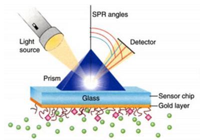 棱镜耦合型表面等离子体共振体系示意图